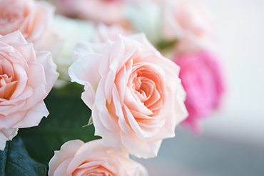 about-roses-image